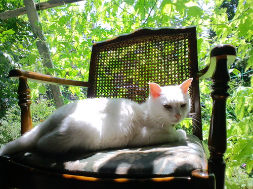 猫、ゴーヤの下で日向ぼっこ。