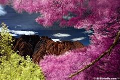 Mountainscape (Infrared) (2121studio) Tags: travel nature wow ir photography climb nikon surrealism madonna dream taiwan nikond50 best ali mount illusion malaysia infrared indah wonderland exploration kuantan malay alam jademountain alpacino yushan mountainscape katewinslet  mirandajuly emmastone beyonc mimpi malaysianphotographer vanessaminnillo kimkardashian yushannationalpark laurenbush ilusi khayalan mendakigunung 7newwondersoftheworld mountyu convertedinfraredcamera 2121studio mountclimbing kuantanphotographer pahangphotographer ciptaanallahswt malaysianinfraredphotographer expeditionfirst thehighestmountainintaiwan mountyushan