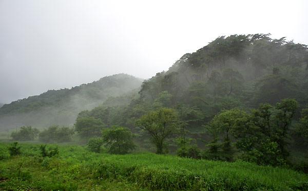 nature_fog