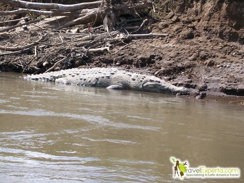 Crocodile Tours On Tarcoles River