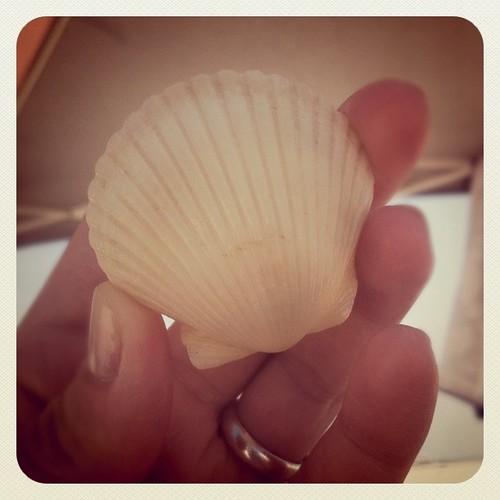 awa seashell