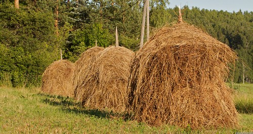 Great haystacks my destiny!