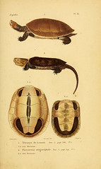 n62_w1150 (BioDivLibrary) Tags: amphibians herpetology reptiles smithsonianinstitutionlibraries sil bhl:page=31895784 dc:identifier=httpbiodiversitylibraryorgpage31895784