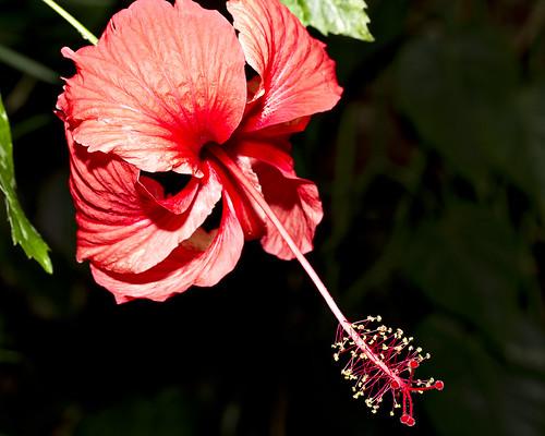 AC Flower 1