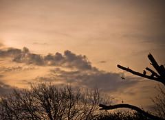 Y el da se desvanece... (Anahi Temporelli) Tags: tree bird clouds contraluz nubes rbol backlighting pjaro canoneos550d canoneost2i
