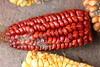 Red corn (janeymoffat) Tags: music ecuador corn andeanmusic maize abd cotacachi redcorn nandamanachi adventuresbydisney flutemakingdemonstration loshermanospichamba
