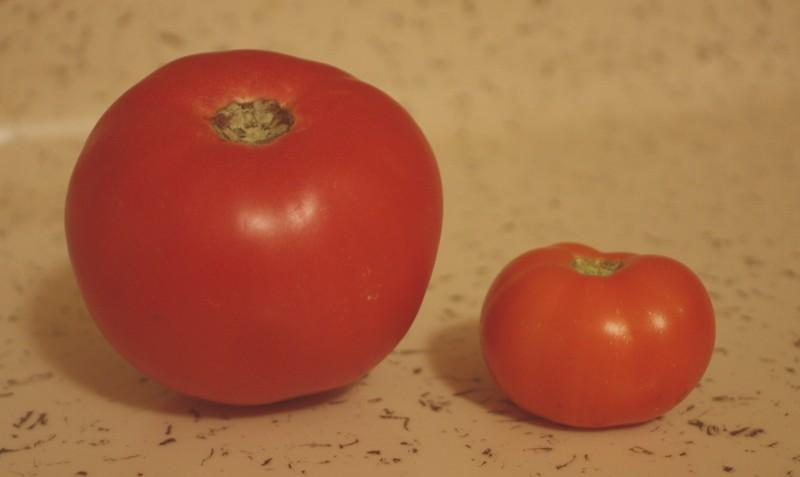 110731 First Tomato comparison