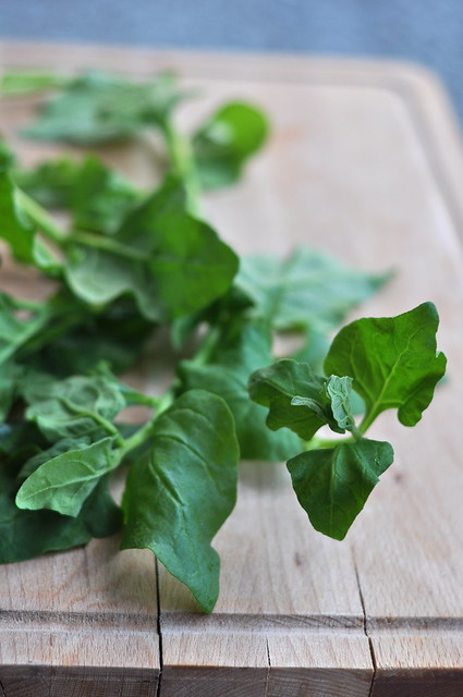 uus-meremaa spinat e. ruutlehik/new-zealand spinach