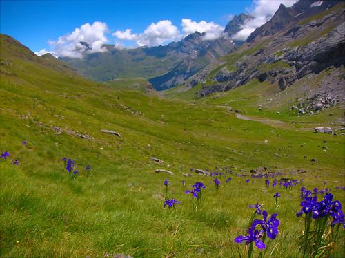 france alpine flowers by Danalynn C