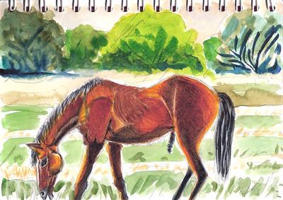 Horse - Cheval by alain bertin