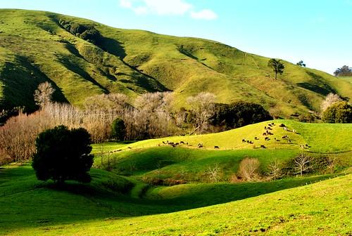NZ_farm_3