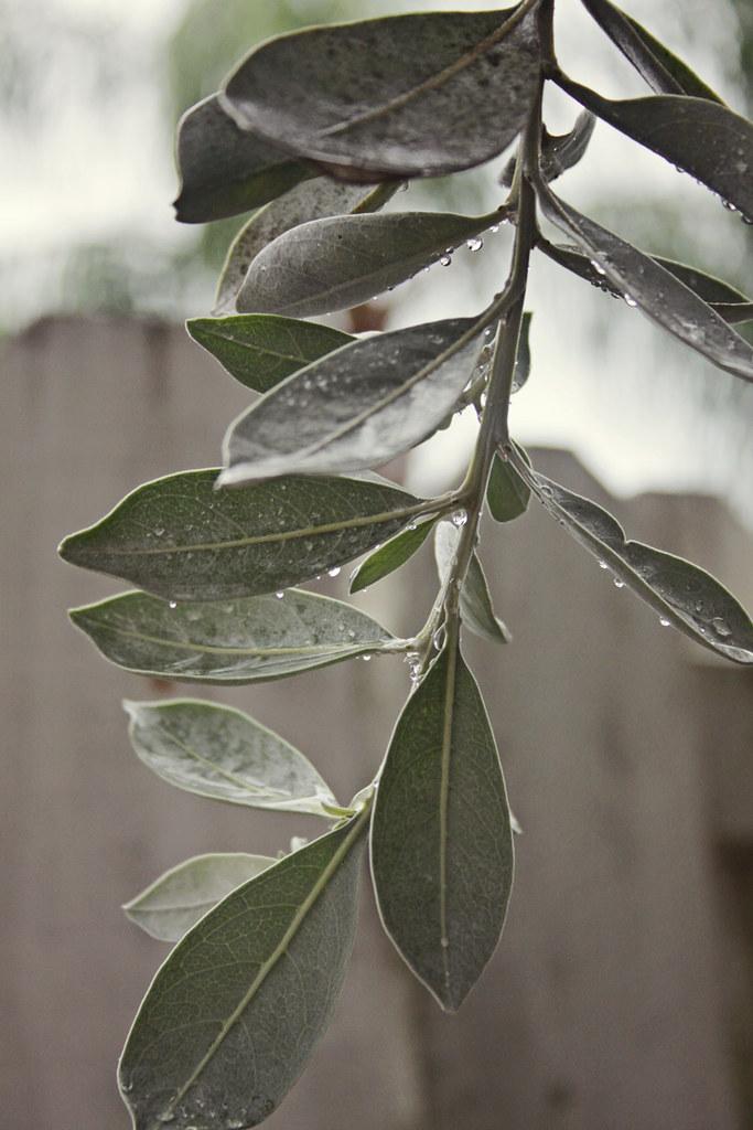 rainy walk 4