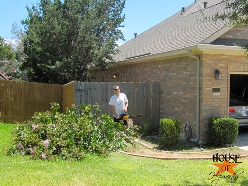 yard_work_tree_cutting_01