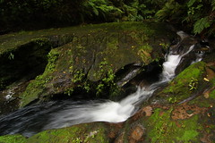 Kaharoa. River scene. (nznatives) Tags: winter waterfall nz nznative bayofplentynz forestscene riverscene kaharoa