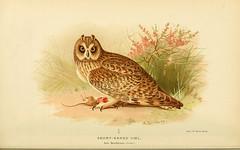 n233_w1150 (BioDivLibrary) Tags: greatbritain history birds museum natural library american pictorialworks taxonomy:binomial=asioflammeus 598242 bhl:page=34514963 dc:identifier=httpbiodiversitylibraryorgpage34514963 taxonomy:binomial=asiobrachyotus
