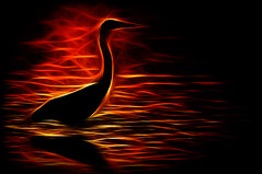 bird-on-fire---2.jpg (andersnordh) Tags: bird flickr teno fgel fotosidan konstfoto fotosidanmagazine