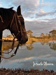 (Jssica Flvia Oliveira) Tags: gua lago cavalo fazenda