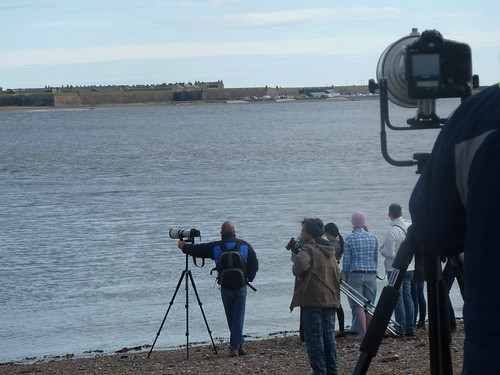 Chanonry Point, Dolphin Watching