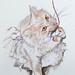 PICT7137 zoom gatto