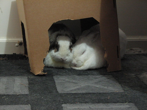 snuggling under the box