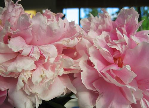 Mom's peony bouquet