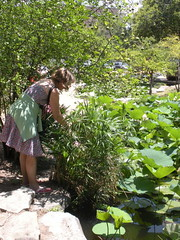 Debra investigating the flowers in the pond