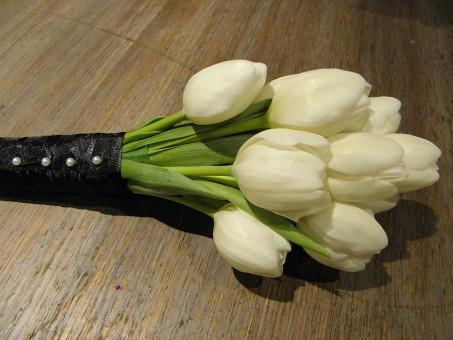 Tulipa hybrids (Tulips)