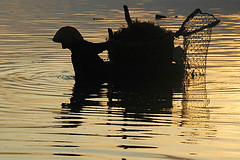 seaweed farming at Jungutbatu, Lembongan Island (Tempo Dulu) Tags: poverty sunset bali seaweed water silhouette work reflections indonesia dusk farming lembongan jungutbatu