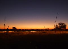 Sunset at the water hole (LeelooDallas) Tags: africa namibia etosha nationa park water hole sunset animal safari landscape dana iwachow 2011 dragoman overland