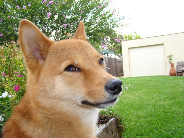 taro shiba: 'yet another picture. really?'