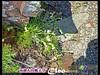 P201107Xue_0378 (Cleo,Huang in TW) Tags: hiking mountainclimbing taiwan 台灣 雪山 sheipanationalpark 雪霸國家公園 201107 panasoniczs3 mtxue