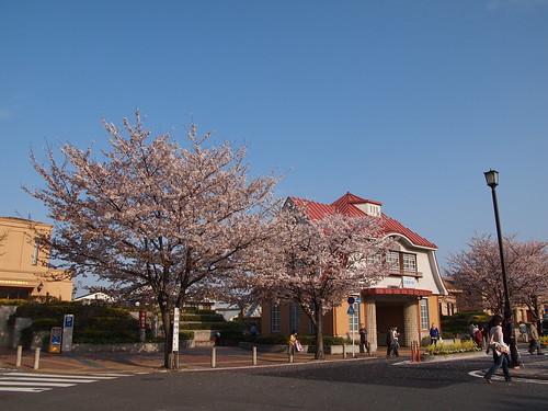 桜 2010 田園調布駅前