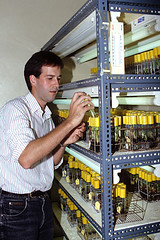 Researcher checks on conserved germplasm (IITA Image Library) Tags: cassava researchers germplasm manihotesculenta