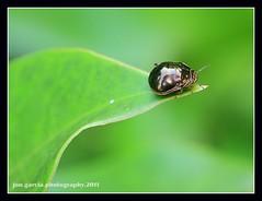 A Bug (opzjon) Tags: macro nature closeup canon bug insect jon jonathan garcia macrophotography greatnature 40d opzjon