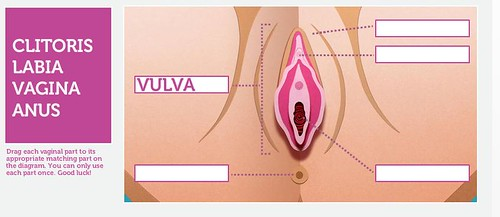 a screenshot of their know-your-vagina game that clearly shows that a vulva is the body part in question