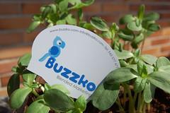 (Buzzko Diseo y Comunicacin) Tags: marketing blended donostia buzzko