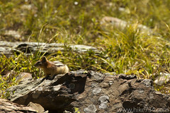 "Golden-mantled Squirrel • <a style=""font-size:0.8em;"" href=""http://www.flickr.com/photos/63501323@N07/5967037507/"" target=""_blank"">View on Flickr</a>"