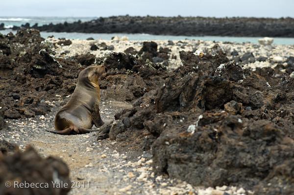 RYALE_Galapagos-223