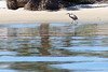According to Wikipedia: