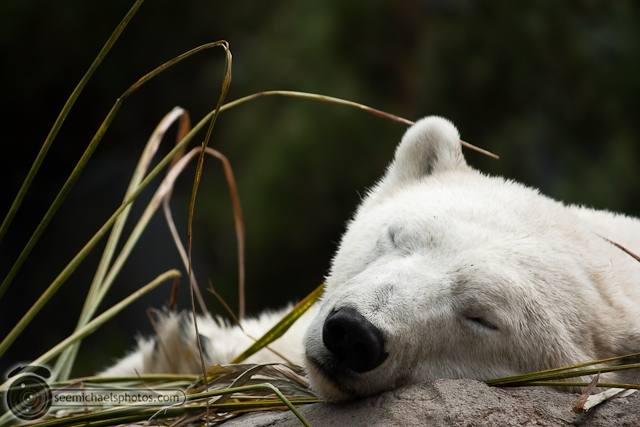 San Diego Zoo 72411 © Michael Klayman-008