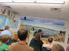 getting a lecture on eagles (sassnasty) Tags: city minnesota river mississippi town eagle mn wabasha