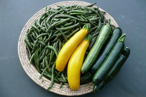 Giugno cosa seminare e piantare nell 39 orto nel giardino for Cosa piantare nell orto adesso