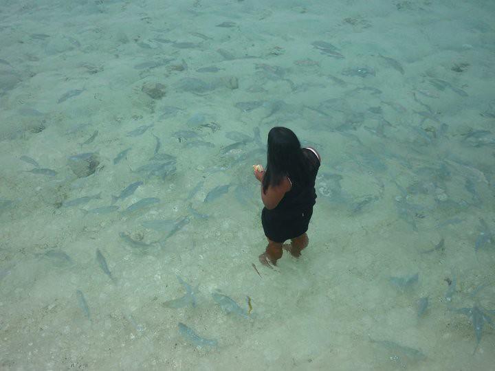 Rarotonga Beach - Feeding Fish