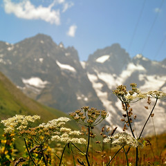 Nature is beautiful (erikomoket) Tags: france alps nature beautiful nikon bokeh altitude explore views belle wildflowers    lanature  148 500x500    lesalpes seeninexplore d5000 inandoutofexplore thebestofday gnneniyisi erikomoket