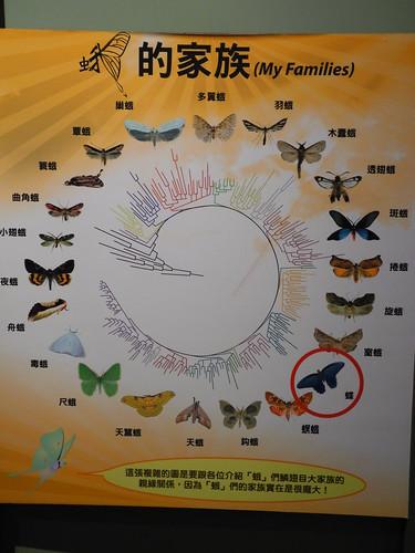 蛾與蝶都是鱗翅目,在台灣卻命運大不同。