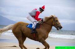 Doolough Races Geesala by Alison Laredo (alison laredo) Tags: ireland mayo horseracing races horserace doolough belmullet geesala nottobeusedwithoutpermission alisonlaredo geesalla wwwalisonlaredocom 0872805608 gessalafestival