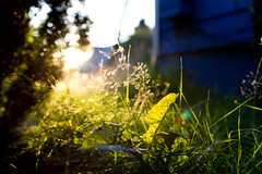 Summer time (bajanga) Tags: blue sunset summer sun hot grass portland evening warm bright warmth grantpark canon24mm14 canon7d