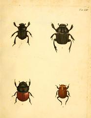 smithsonian libraries beetles arthropoda sil institution pictorialworks bhl:page=12733313 dc:identifier=httpbiodiversitylibraryorgpage12733313 bhlarthropod