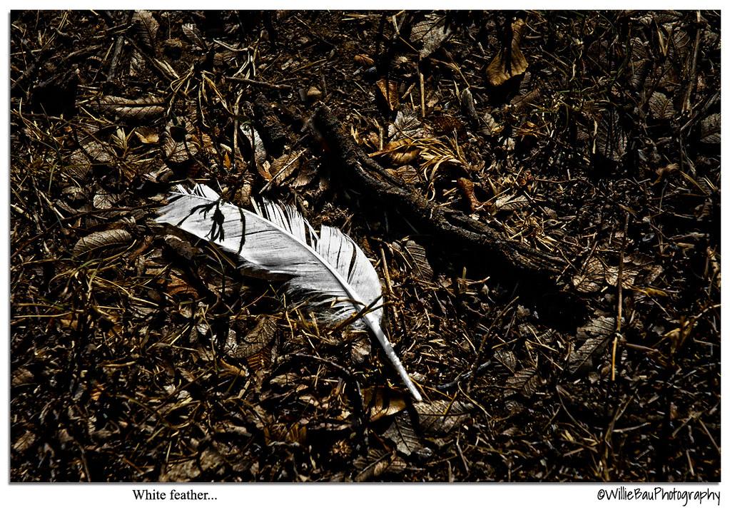 White feather...
