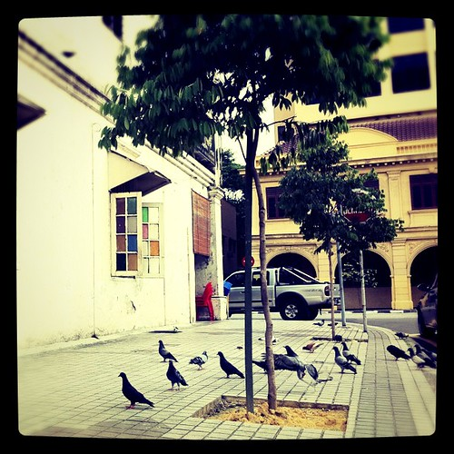 Pigeons in front of Yut Kee